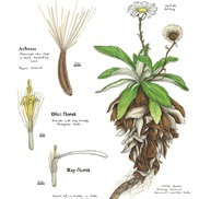 Nature Illustration portfolio item