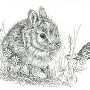 Animal Illustration portfolio item